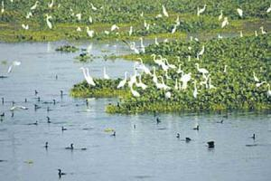 wetlands-india