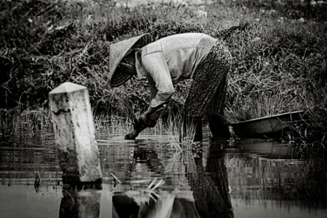 Rice farmer - Thomas Jeppesen